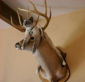 cat on antlers