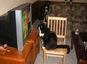 cat in front of TV