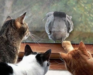 cats watching bird