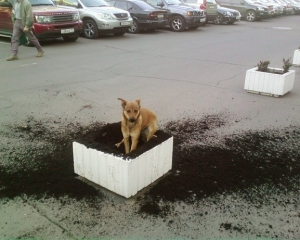 dog in dirt