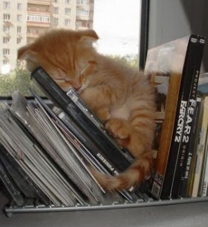 kitten on cds