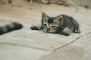 kitten and tail
