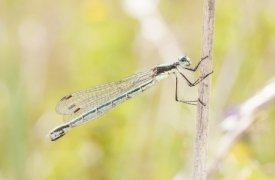spiritual direction from damselfly